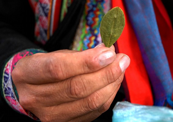 Coca leaf: Myths and Reality | Transnational Institute