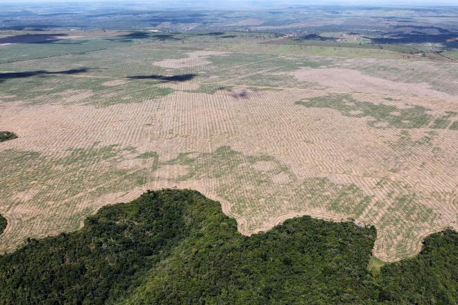 Deforestation in Brazil is fueled by industrial agricultural exports