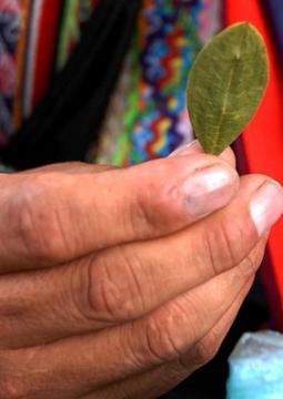how to turn coca leaves into cocaine